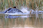 Fish-Out-of-Water-IMG_3006